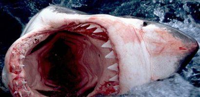 Những loài quái thú khổng lồ làm chao đảo màn ảnh rộng