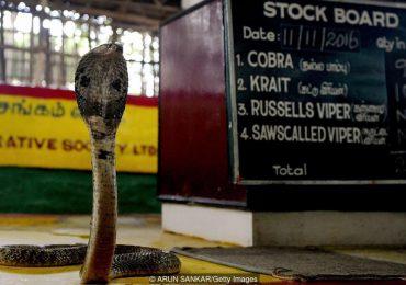 Bí ẩn bộ tộc người rắn ở Ấn Độ