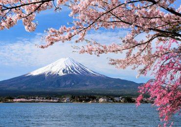Hoa anh đào nở bất ngờ giữa thu, người Nhật 'đón xuân sớm'