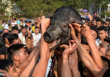 Bắt lợn, bứt lông để cầu may đầu năm