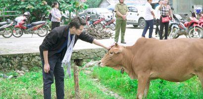 Vũ Mạnh Cường cùng các Hội, Quỹ Từ thiện tặng bò cho bà con Hà Giang