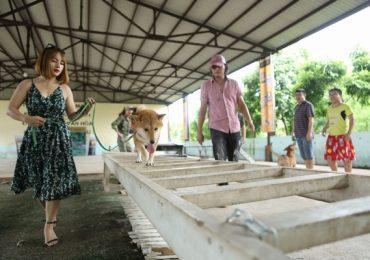 Vai chính 'bốn chân' của phim điện ảnh 'Cậu Vàng' chính thức lộ diện