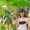 Trà Ngọc Hằng khoe mảnh đất tiền tỷ, mỗi năm thu 500 triệu tiền lãi nhờ vào việc trồng trái cây