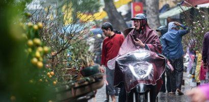 Người Hà Nội đội mưa mua đào, quất rớt giá chiều 30 Tết