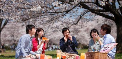 Những nguyên tắc để không 'mất mặt' khi đến Nhật Bản ngắm anh đào