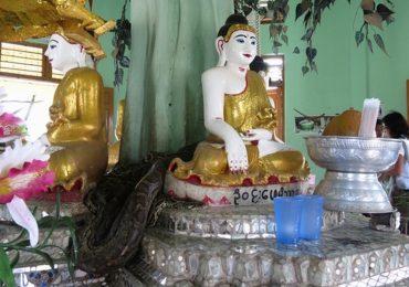 Ngôi chùa chuyên nuôi trăn thách thức du khách ở Myanmar
