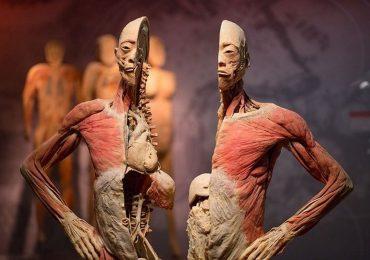Triển lãm xác người của 'Tiến sĩ Thần chết' gây tranh cãi